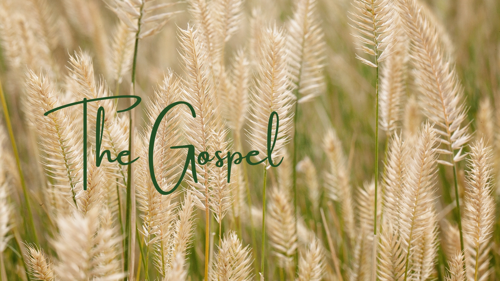 - The Need for the Gospel (May 19, 2019)The Basics of the Gospel (May 26, 2019)How to Win Against Sin (June 23, 2019)Sin Forever Gone (June 30, 2019)