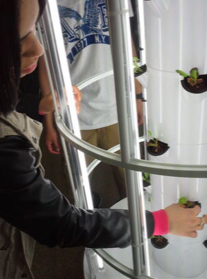 UAGC Student Developing Hydroponics
