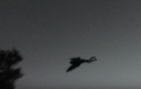 Recent Mothman sighting