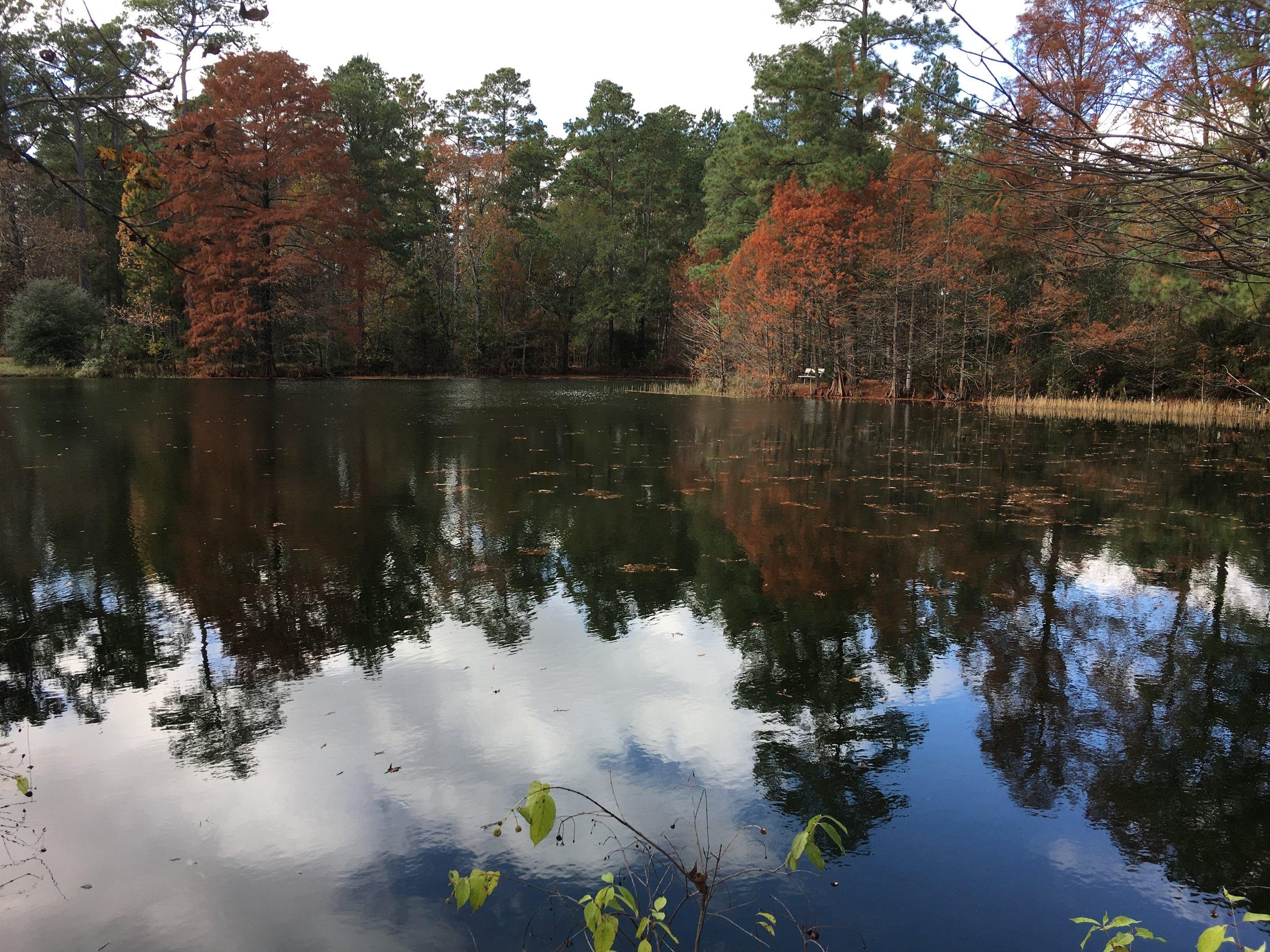 WB Jones Pond.JPG