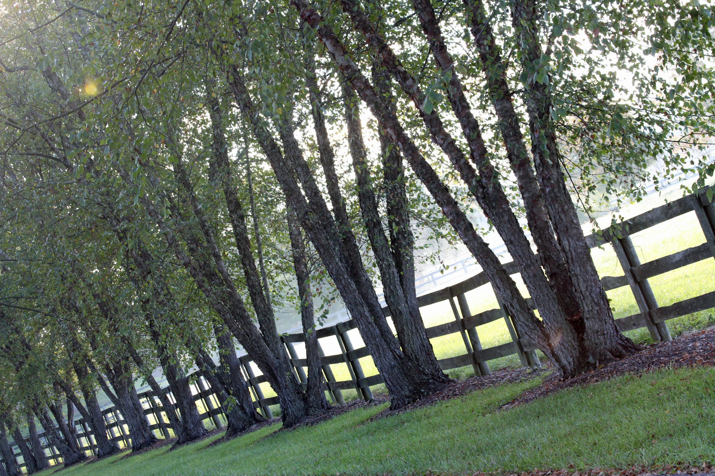 Driveway 1.jpg