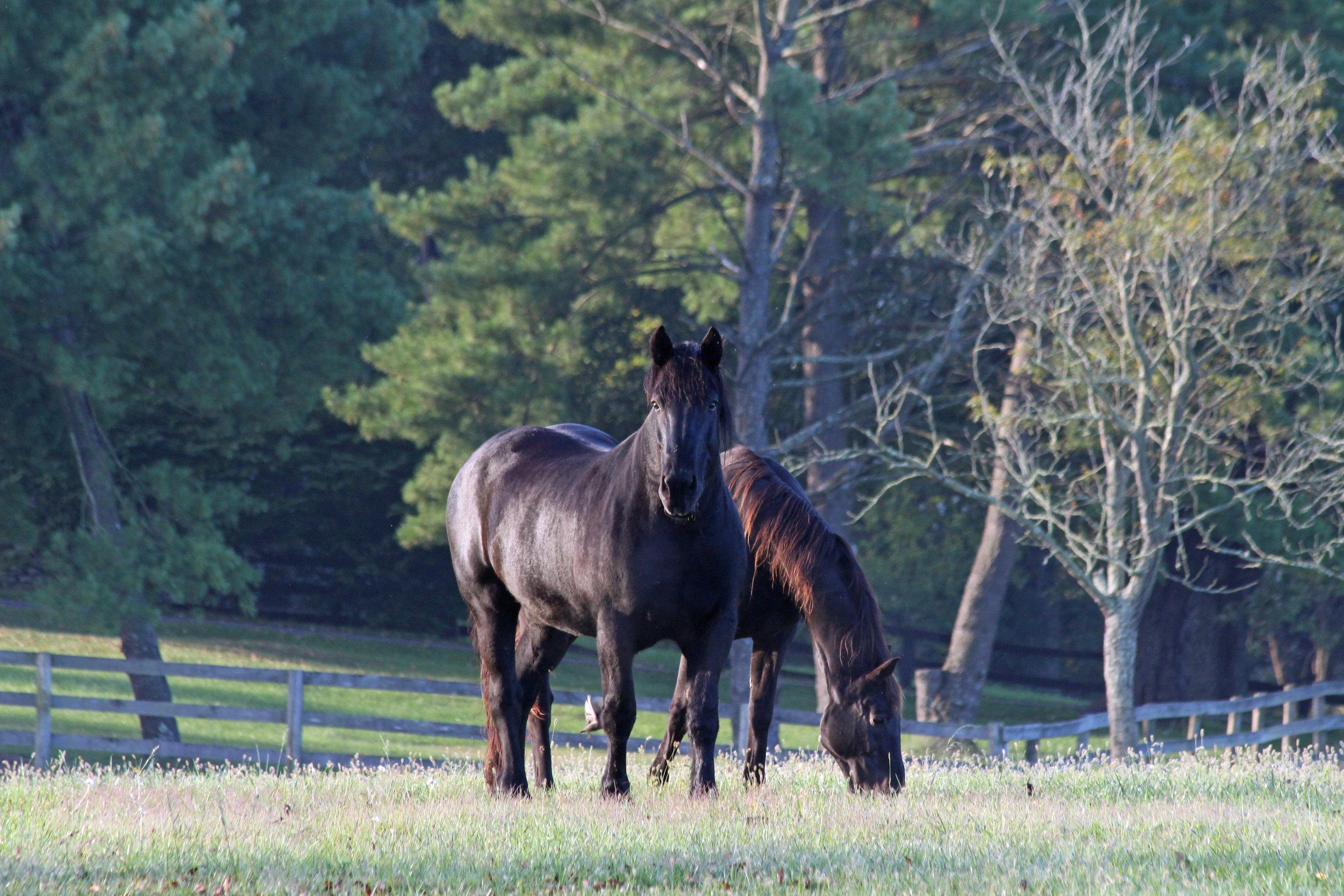 Horse 10.jpg