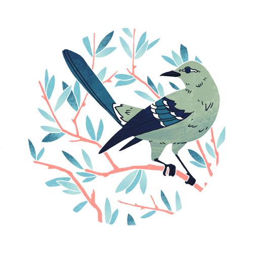 Northern Mockingbird  digital, 2015