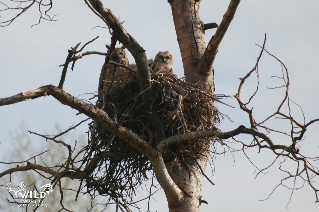 wildlife owls utah.jpg