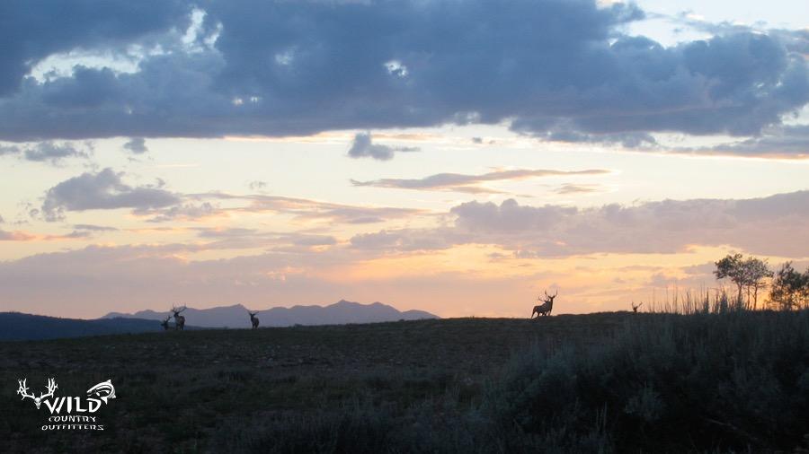 wildlife utah bull elk mountain sunset.jpg