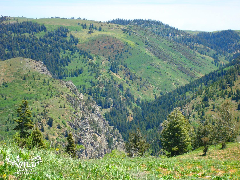 desere ranch pine tree rocky mountains utah.jpg