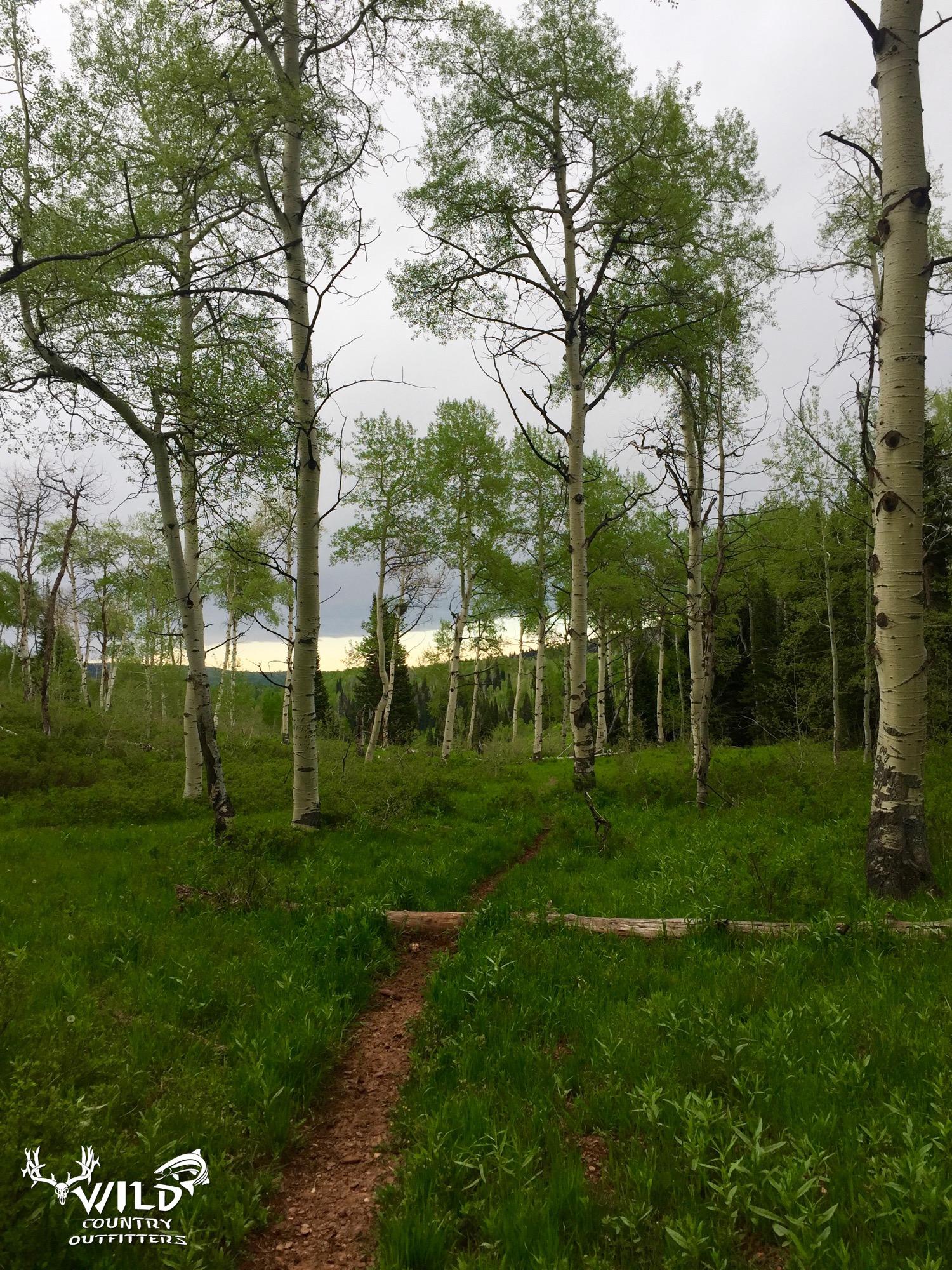 deseret ranch utah game trail.jpg