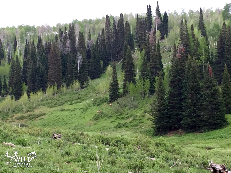 deseret ranch utah pine trees.jpg