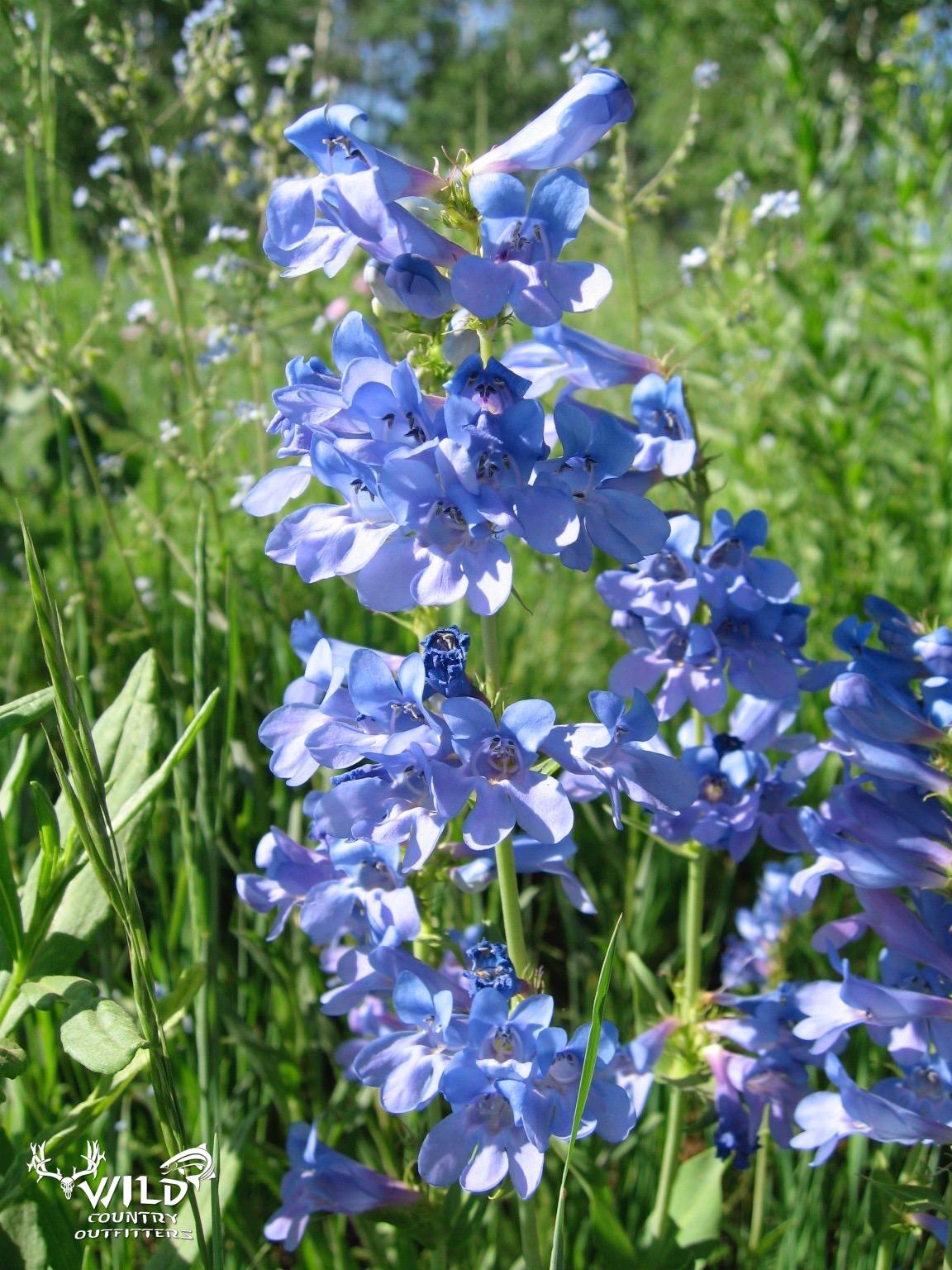 Deseret ranch utah rocky moutains wild flowers.jpg