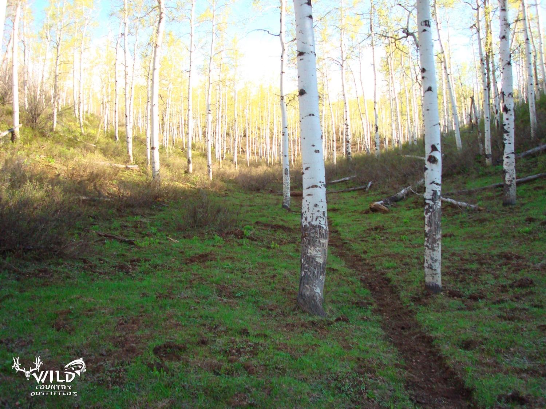 utah rocky mountain aspen trees.jpg