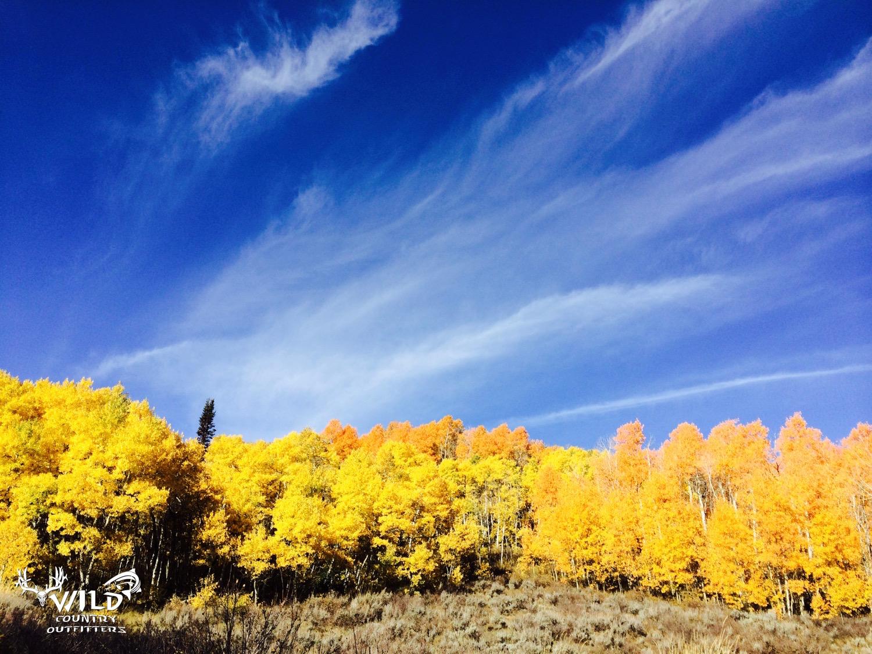 utah fall yellow aspens rocky mountains.jpg