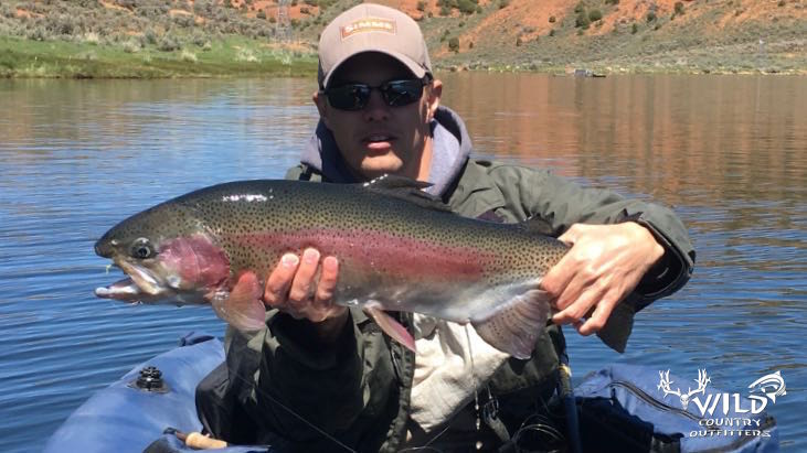 utah fly fishing big rainbow trout (1).jpg