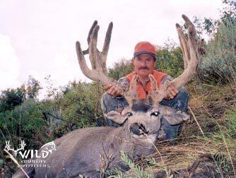 utah buck mule deer hunt velvet (2).jpg