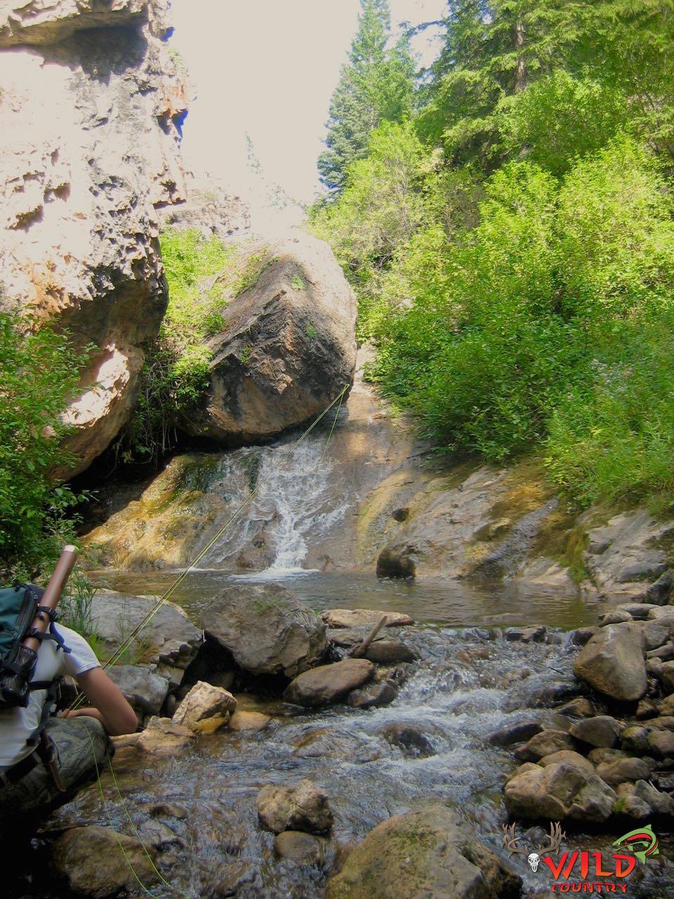 Utah fly fishing creek (2).jpg