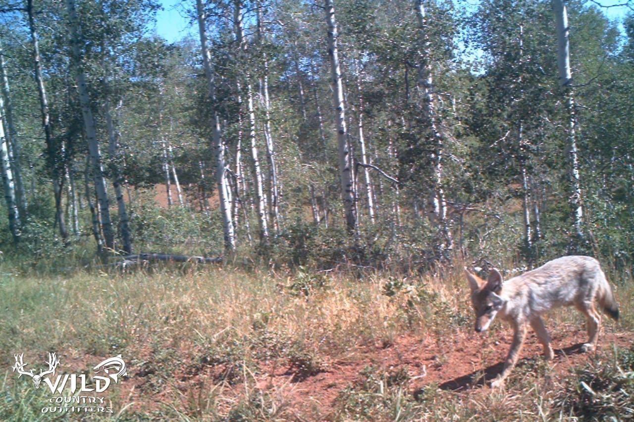 Utah Wildlife - 2.jpg