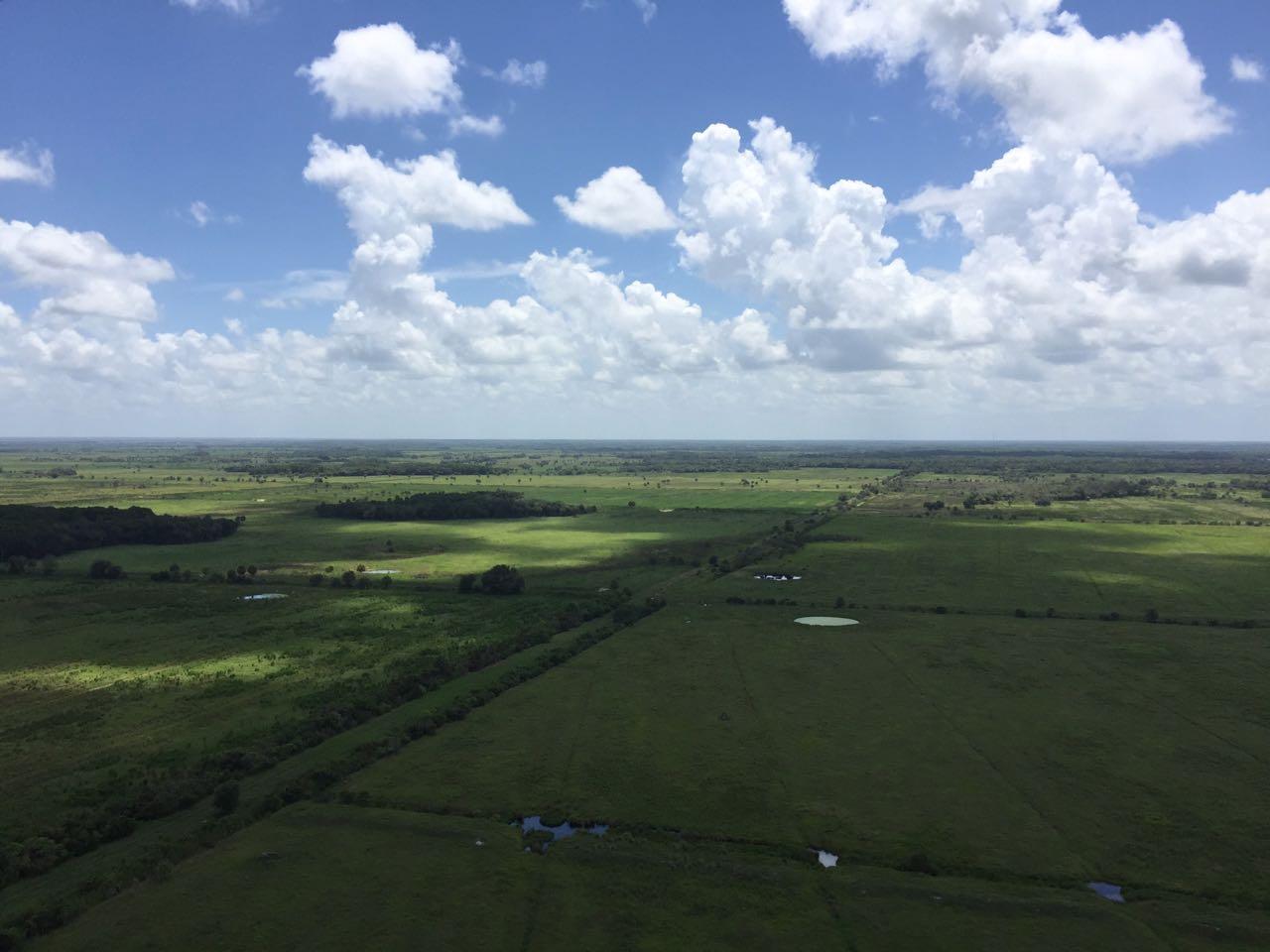 deseret-cattle-citrus-florida-ranch (6).jpg