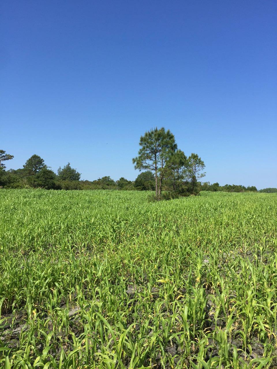 deseret-cattle-citrus-florida-ranch (8).jpg