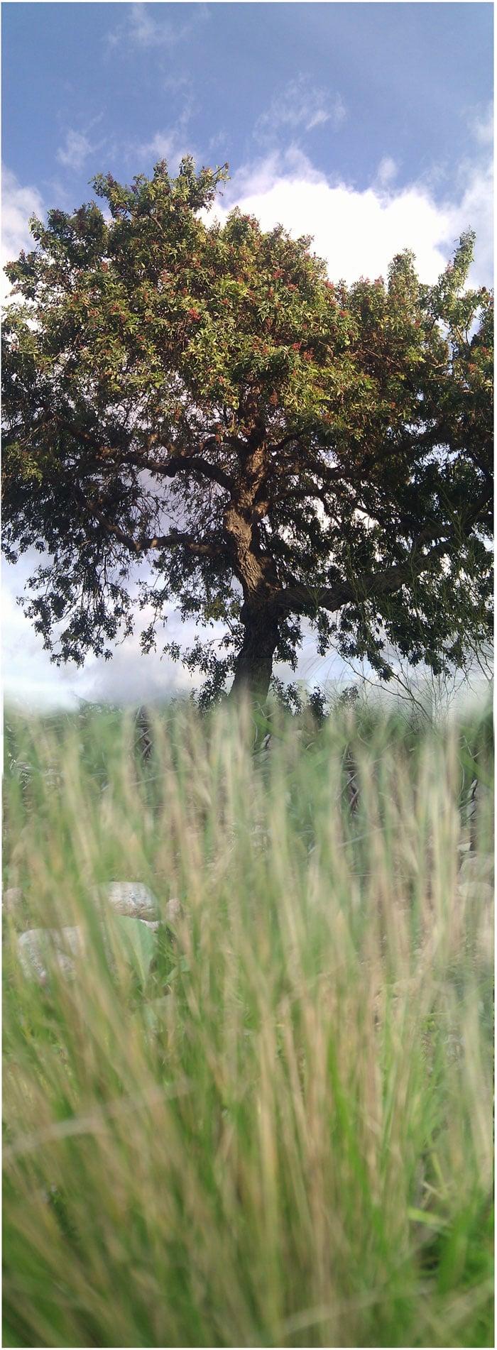 tree-in-the-garden(web)