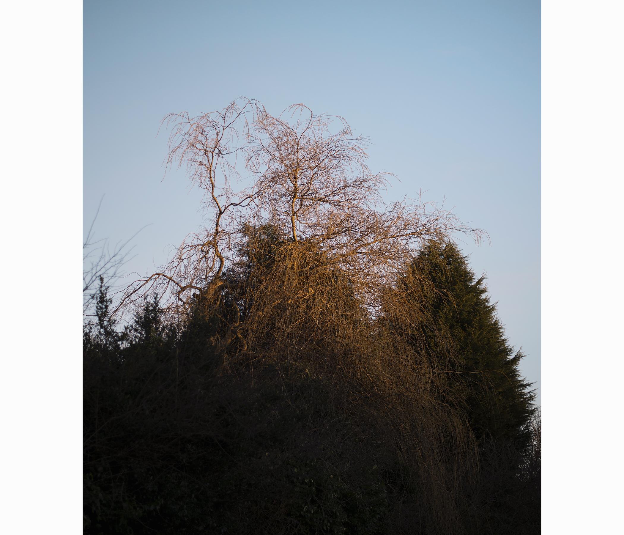 Sundownweb2.jpg