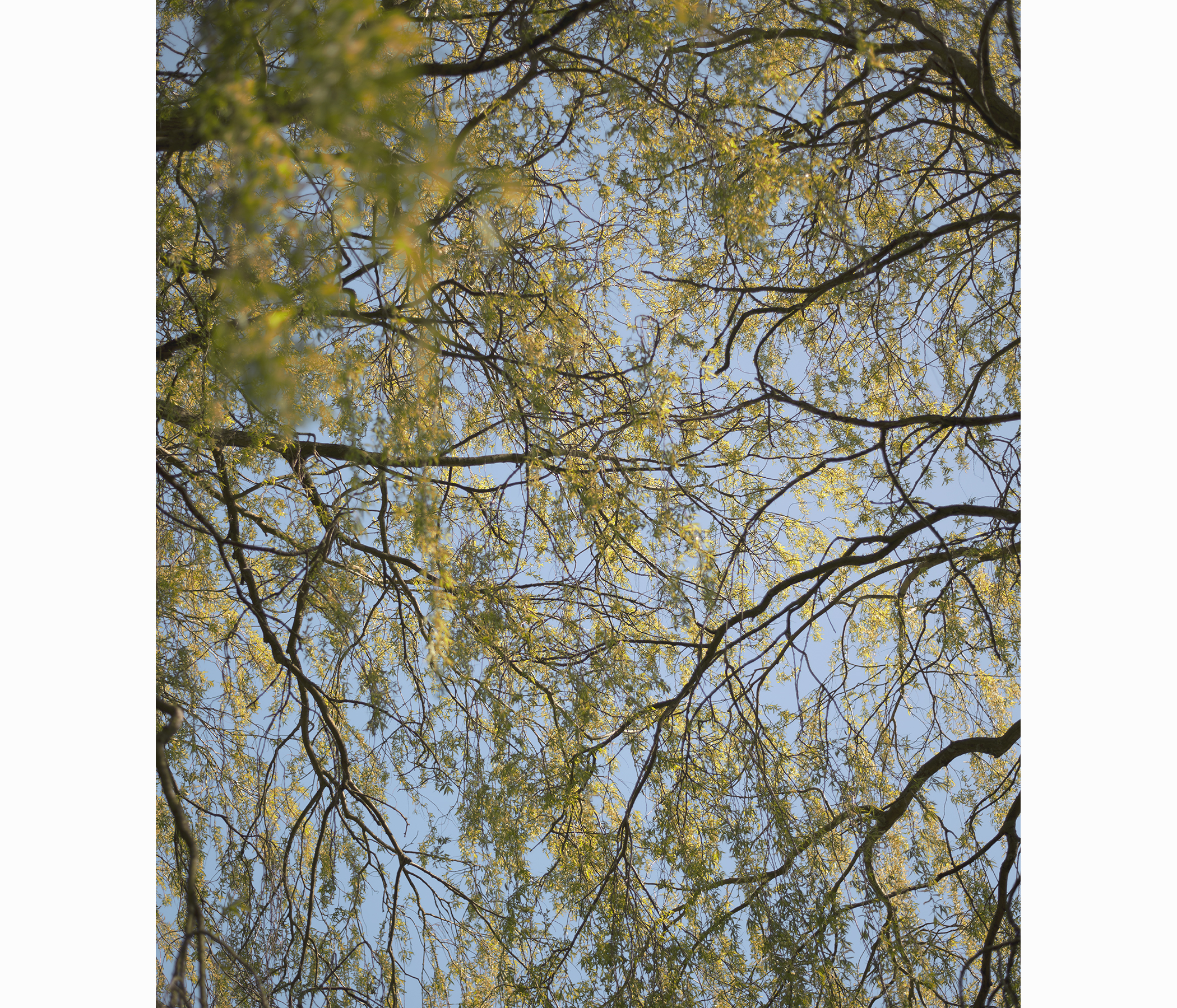 willowweb.jpg