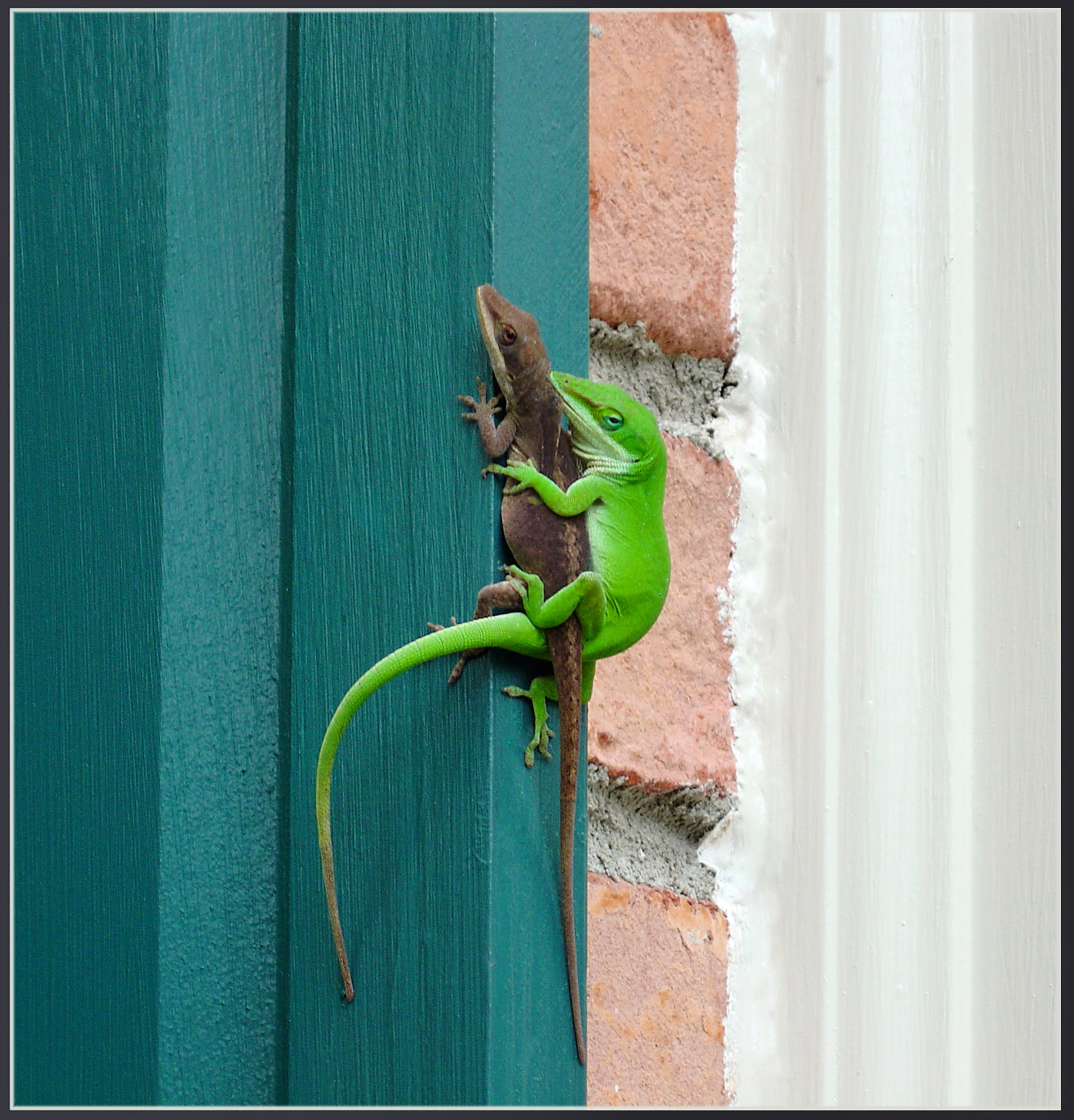 Lizard Love.jpg