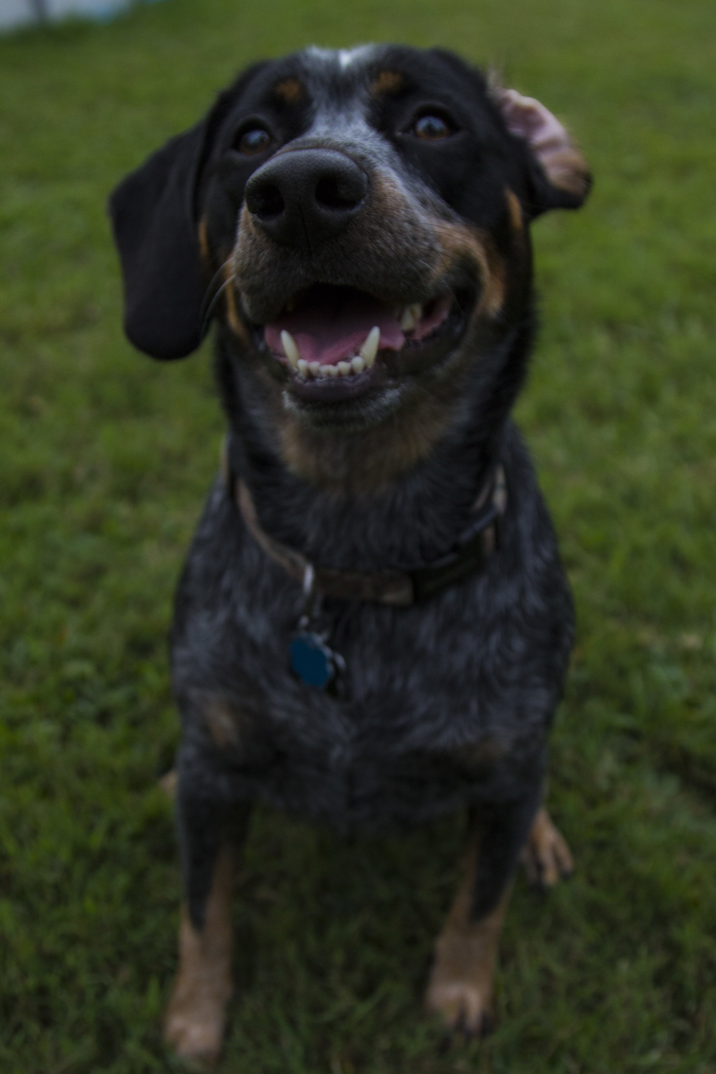 Dog Photos_29.jpg