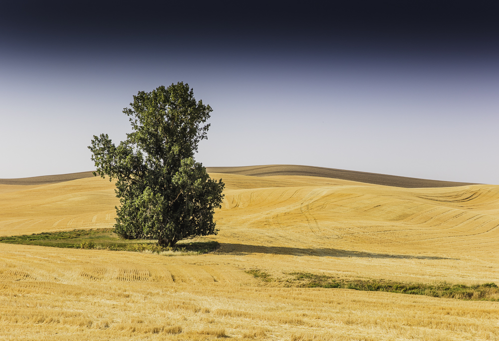 washington Palouse2.jpg