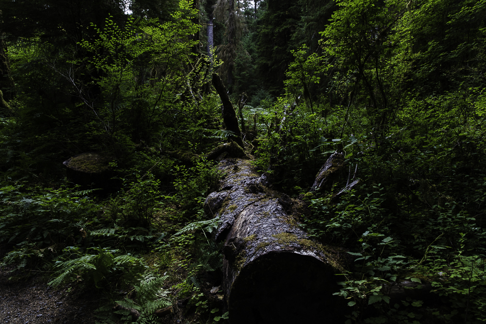 washington ho rainforest1.jpg