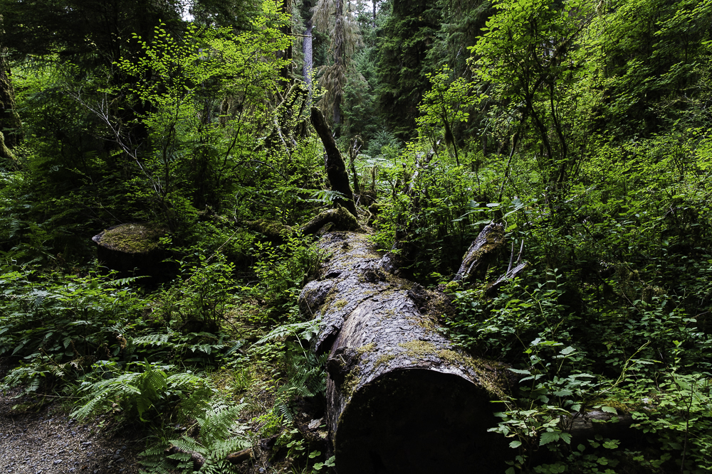 washington ho rainforest2.jpg