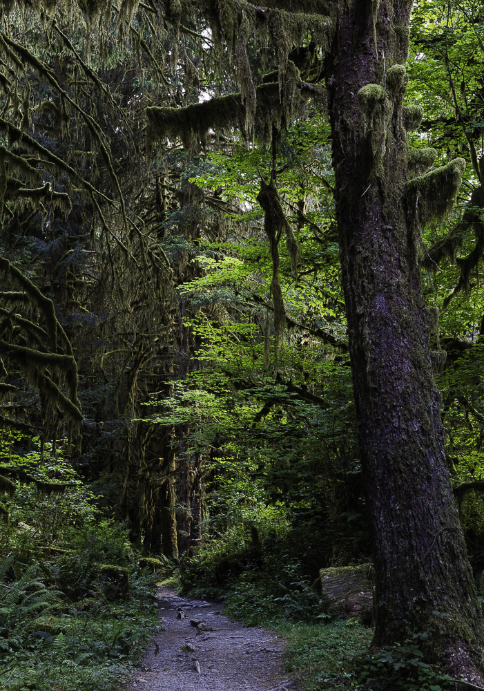 washington ho rainforest7.jpg