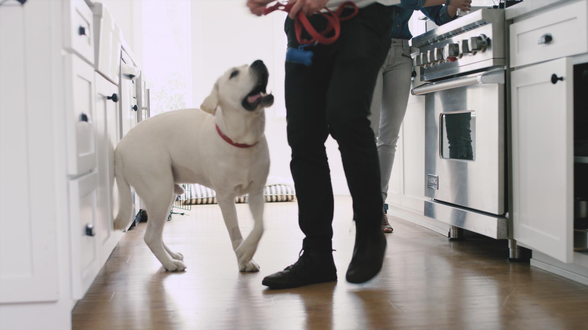 dog-actor-los angeles-prizm-kitchen-woodwalk