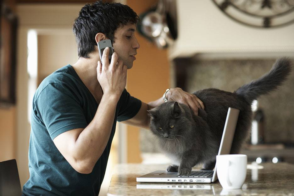 Professional Cat Sitter San Francisco