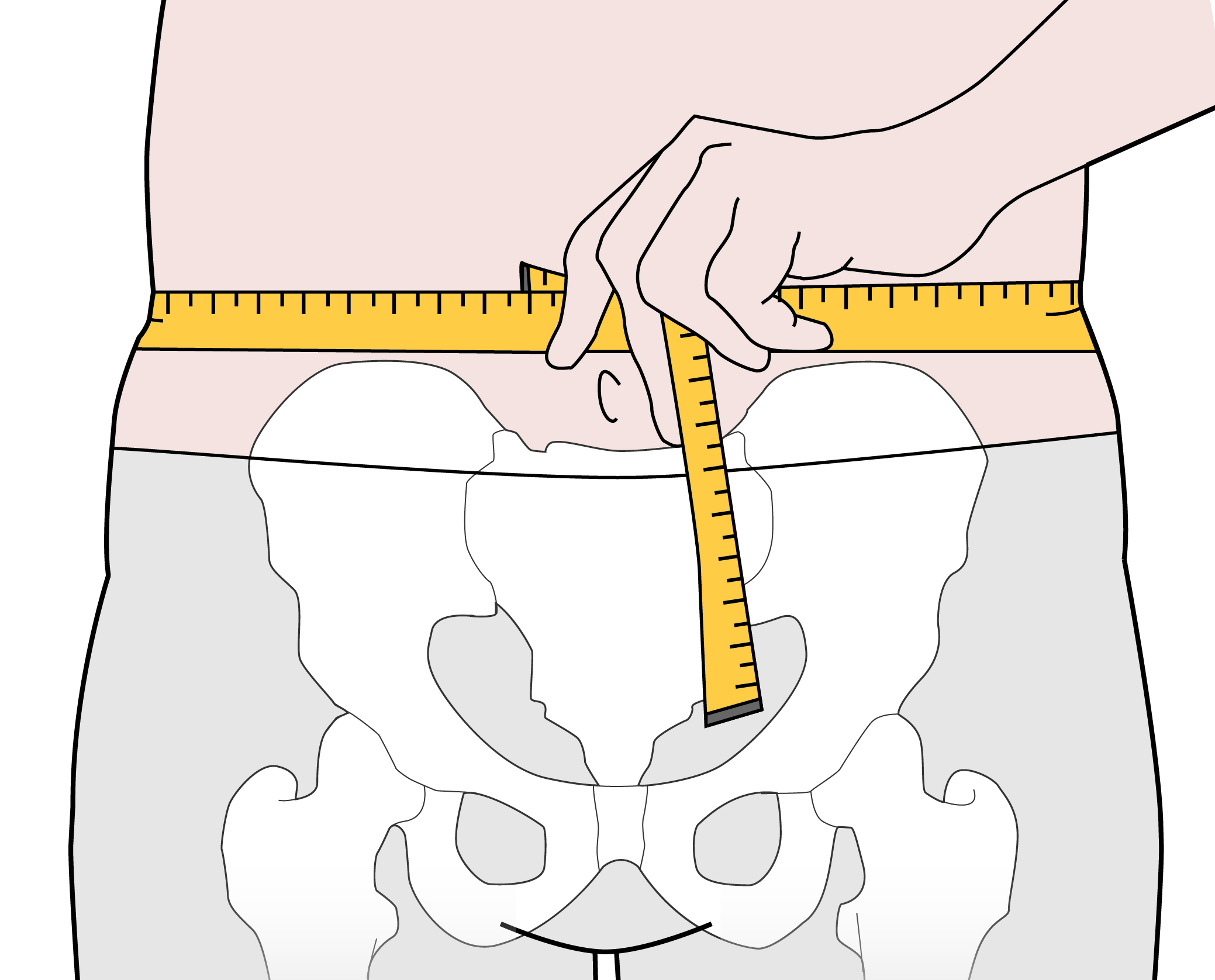 Place the tape measure evenly around the abdomen at the level of this bone.