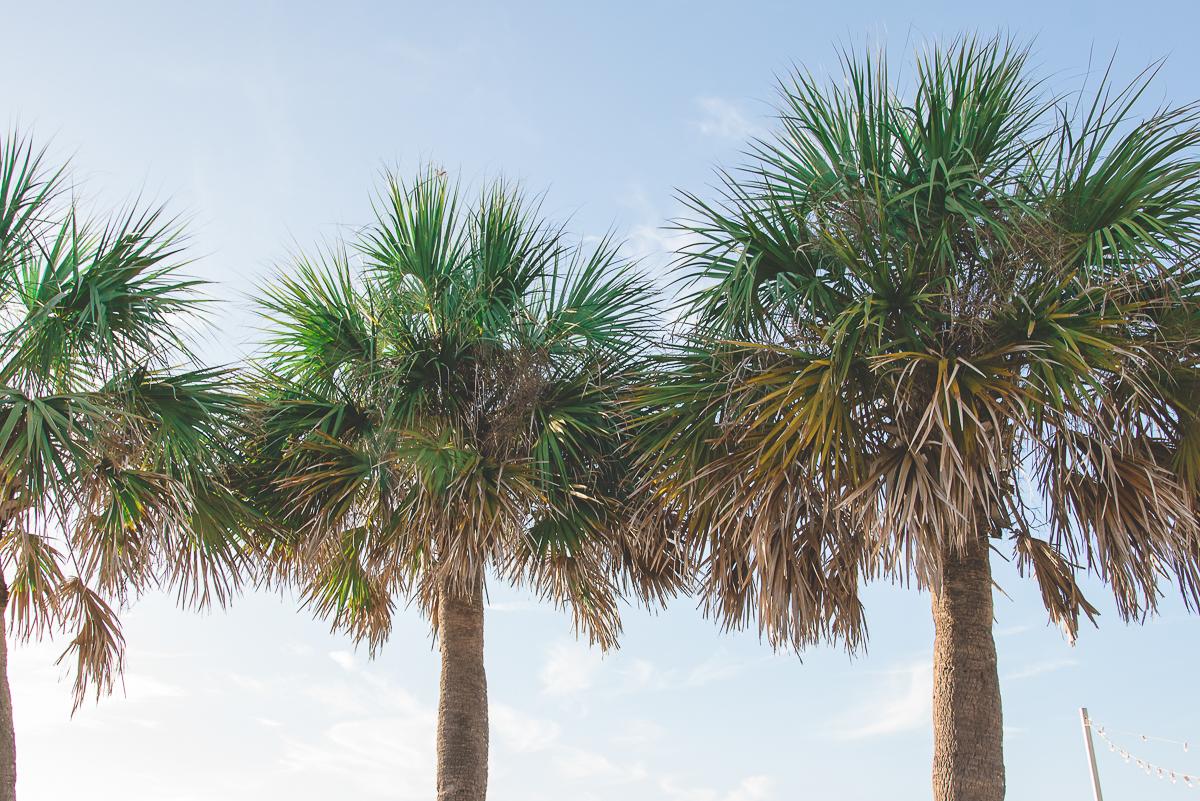 trees-beach-wedding