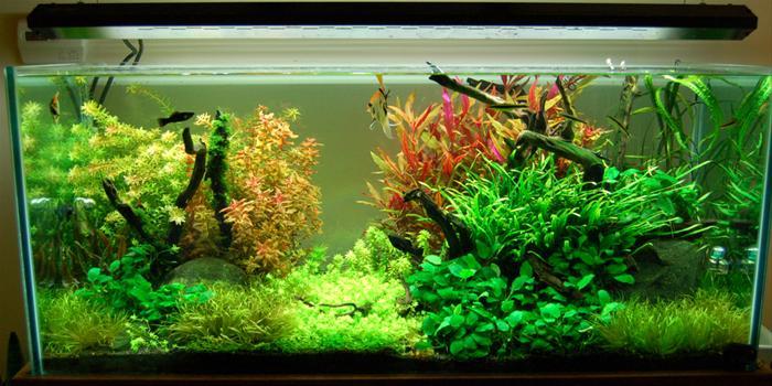 Freshwater-Aquarium-Plants_170330_image.jpg