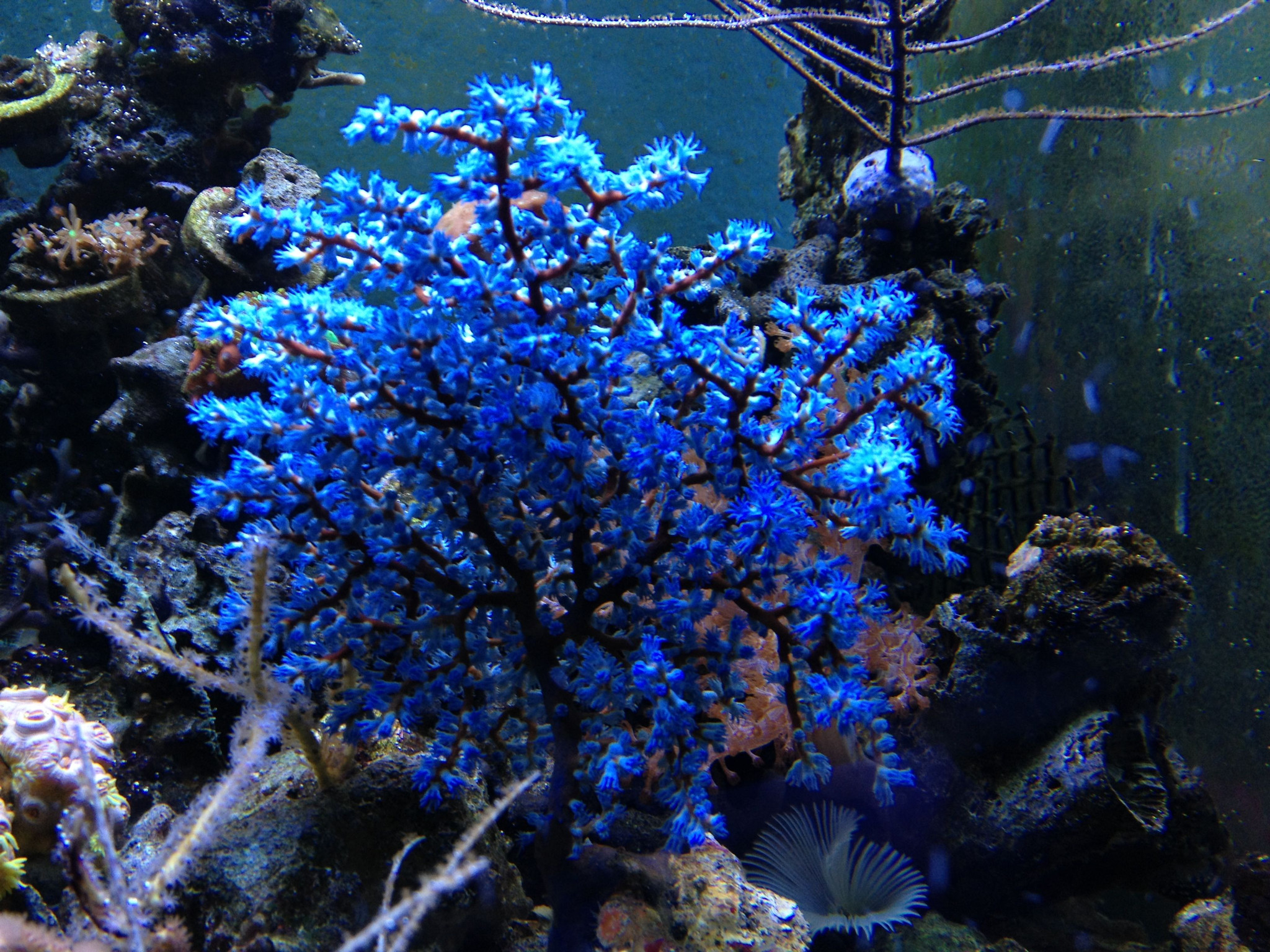 blueberry gon.jpg