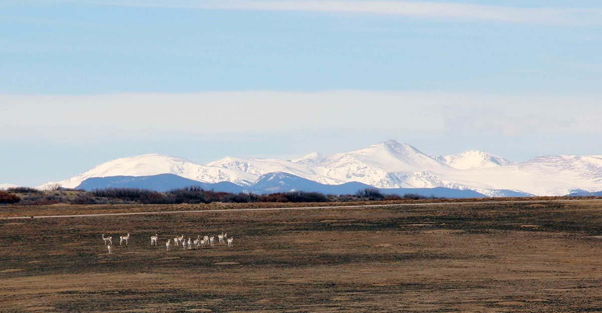 Antelope Under Mtns.jpg