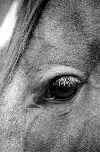 """""""A Kind Eye"""" Photo © Barbara Van Cleve. All Rights Reserved."""