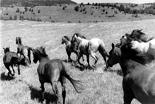 """At a Hard Run"" Photo © Barbara Van Cleve. All Rights Reserved."