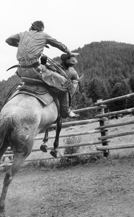 """""""First Saddling,"""" Photo © Barbara Van Cleve. All Rights Reserved."""