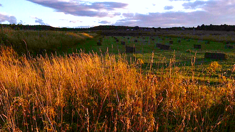 A Northern New Mexico hay field