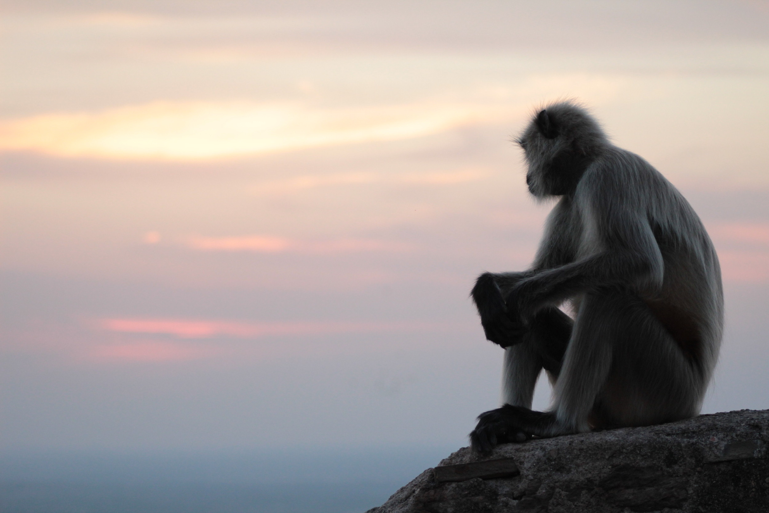 This monkey in Rajasthan said so much by doing so little.