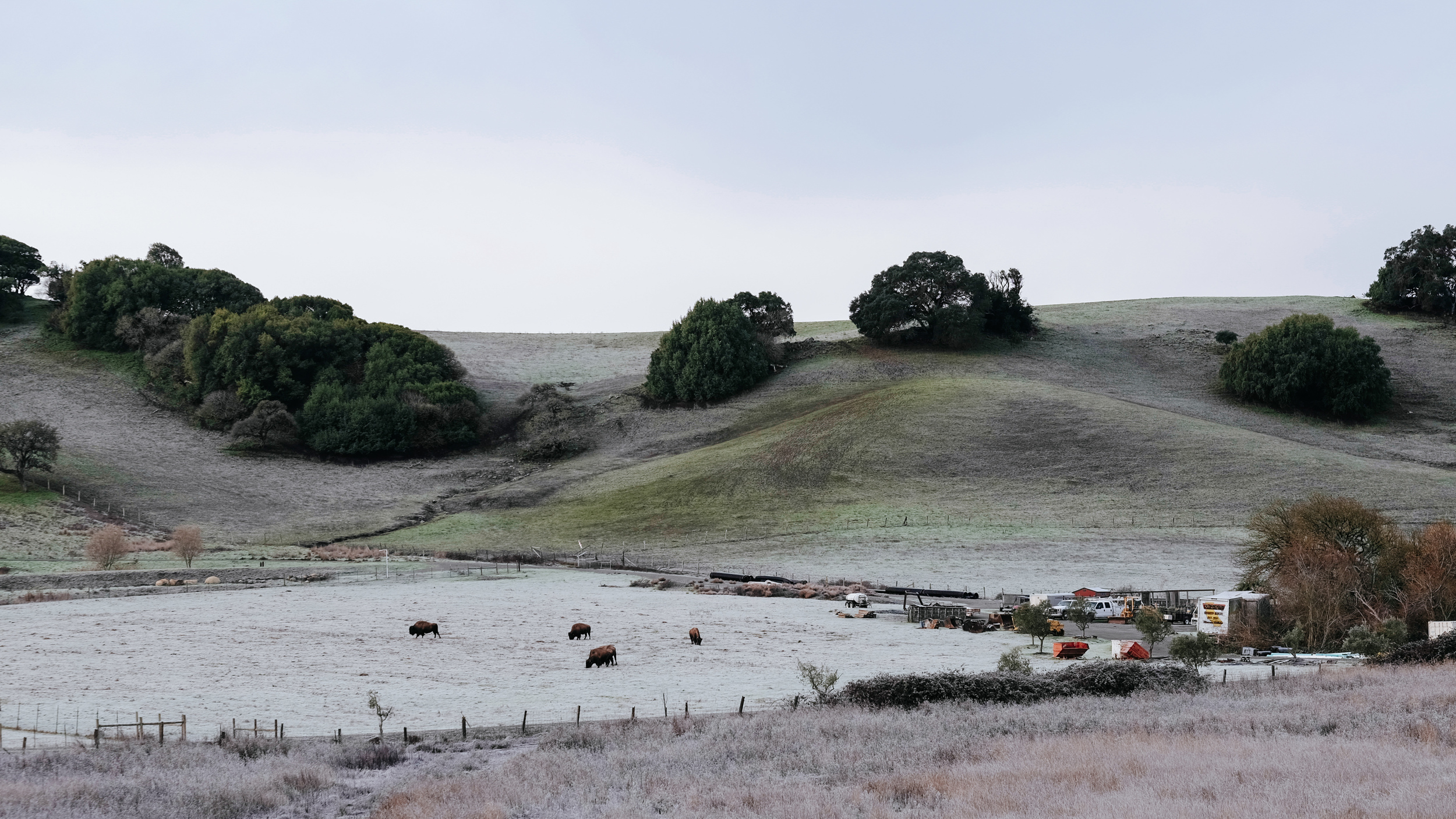 This was the view from the bedroom at Red Barn Inn in Cotati, California. Those are the owner's pet bison grazing. Photo: Marc