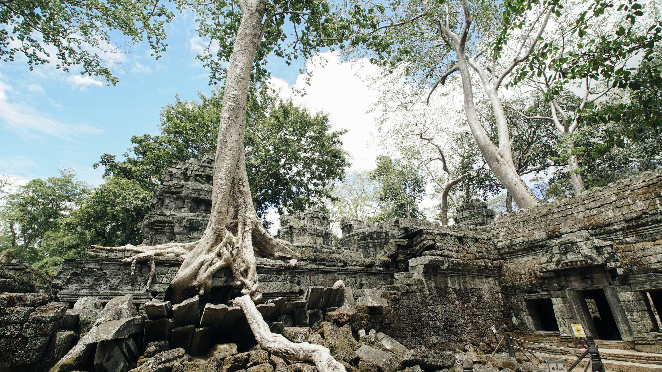 Life reaffirms itself everywhere. Here, trees grow from the ruins of temples in Angkor Wat, Cambodia.