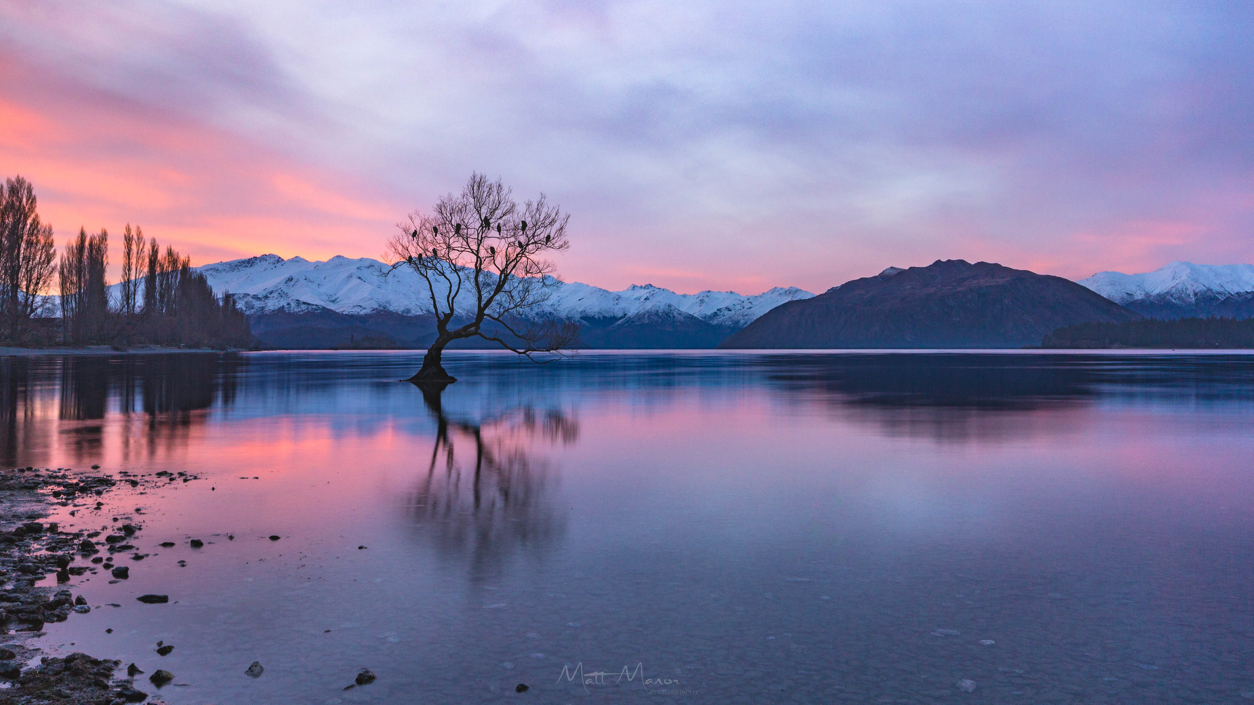 Wanaka Tree Sunset 2.jpg