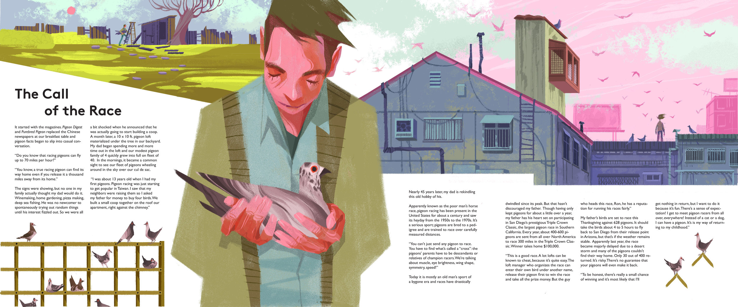 The Call of the Race  Illustration and writing about my father's return to pigeon racing.