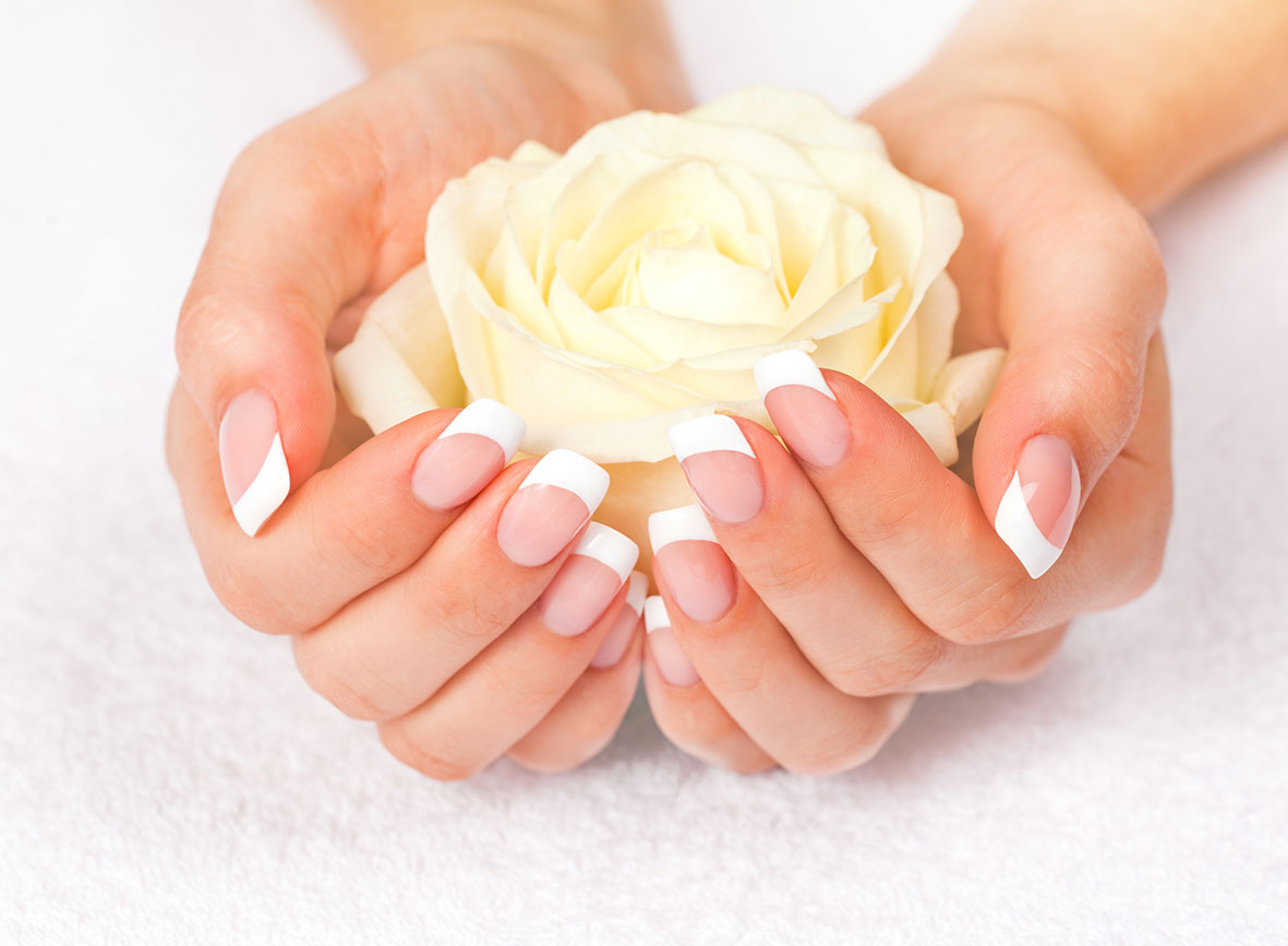 beautiful nails with hands holding a white rose