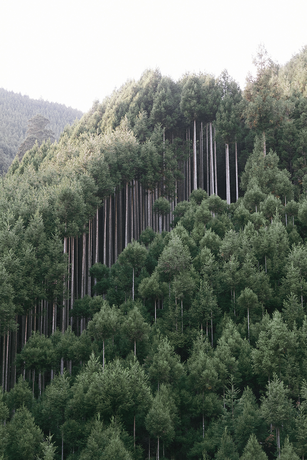 Kitayama cedar forest in northern Kyoto, Japan.