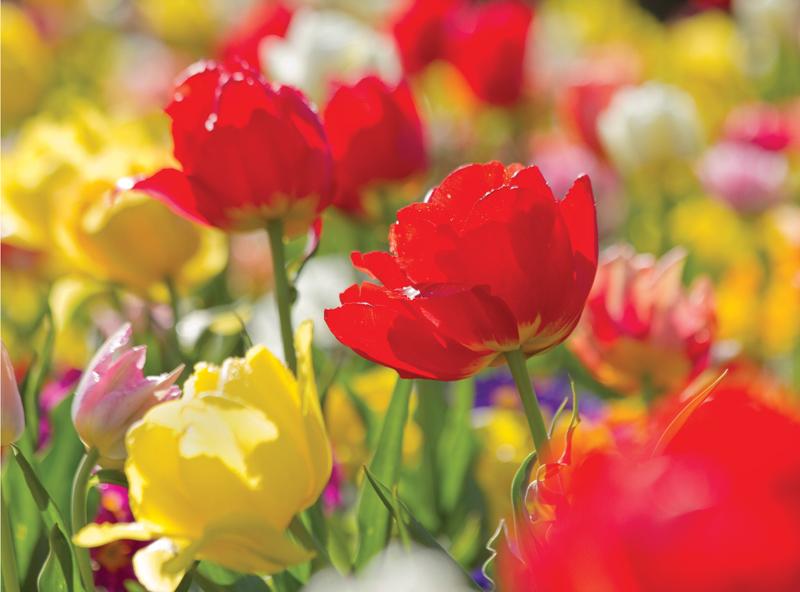 A6 Patch Work Tulips copy (1).jpg