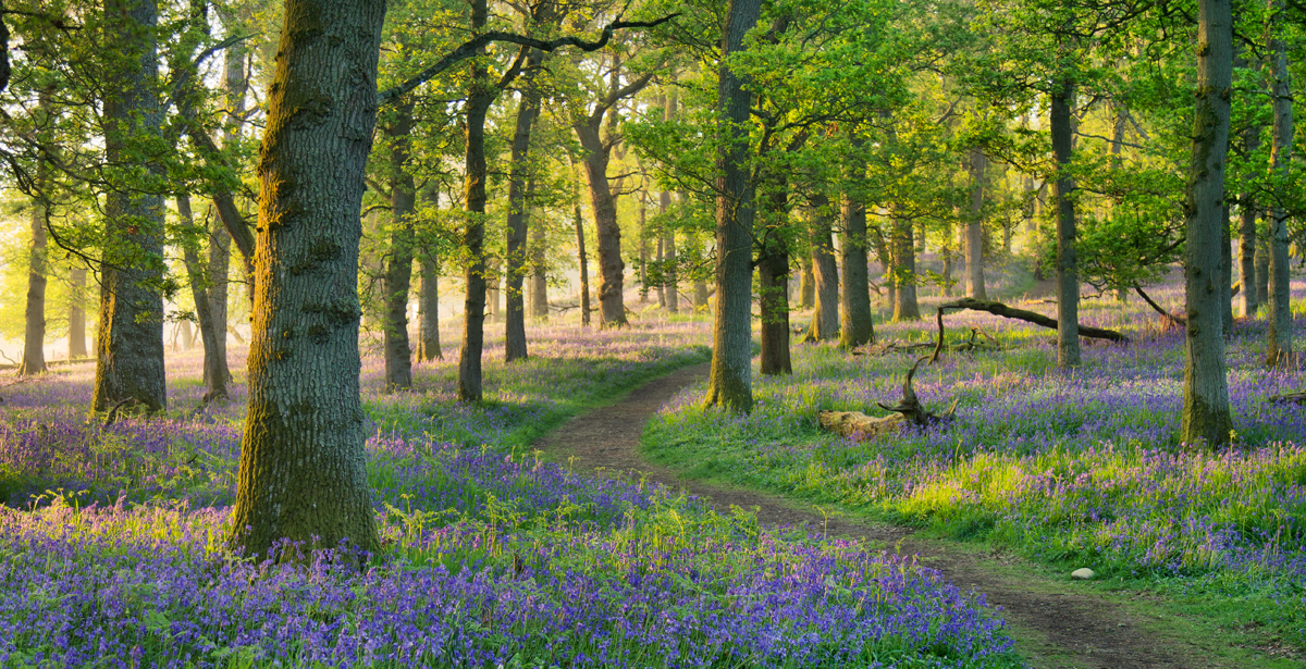 When the bluebells reached the height of their bloom, well, they were a sight to behold! This beautiful place truly offered up a blue haze reaching way out into the woods and beyond. Small yet clear paths wind their way through the trees making photo opportunities endless.